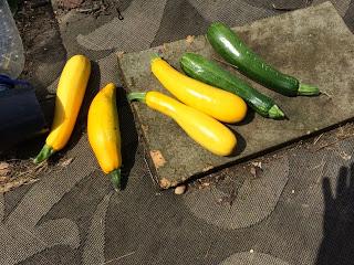 Courgette (Zucchini) Relish