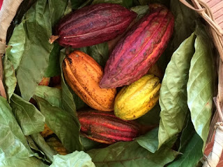 Grenada: The 2nd Annual Grenada Chocolate Festival – Bean to Bar