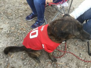 Tailgate party dog supporter